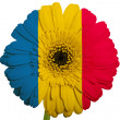 Stock Photo: Gerberdaisy flower in colors national flag of romanion whi