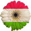 Gerbera daisy flower in colors national flag of tajikistan   on  — Stock Photo