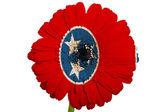Flor de la margarita de gerbera en bandera de colores del estado americano de tenness — Foto de Stock