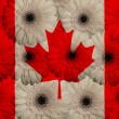 Stylized  national flag of canada     with gerbera flowers — Stock Photo