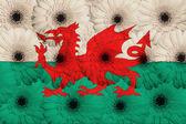 Bandera nacional estilizada de gales con flores gerbera — Foto de Stock