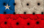 Stylized national flag of chile with gerbera flowers — Stock Photo