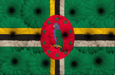 Stylized national flag of dominica with gerbera flowers — Stock Photo