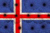 Bandeira nacional estilizada da Islândia com gerbera flores — Fotografia Stock