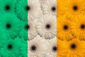 Bandera nacional estilizada de irlanda con flores gerbera — Foto de Stock