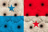 Stylized national flag of panama with gerbera flowers — Stock Photo