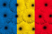 Stylized national flag of romania with gerbera flowers — Stock Photo