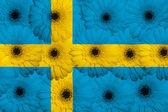 Bandera nacional estilizada de suecia con flores gerbera — Foto de Stock