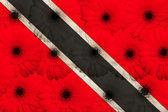 стилизованные национальный флаг тринидад тобаго с цветочное герберы — Стоковое фото