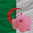 Piggy rich bank and  national flag of algeria - Stock Photo