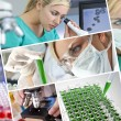 Female Scientist Doctor in Research Laboratory — Stock Photo