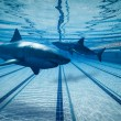 Surreal images of Sharks in swimming pool — Stock Photo #18289023