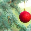 Royalty-Free Stock Photo: Red Christmas ball (xmas ball) on Christmas tree