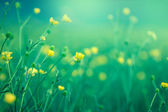 Blooming little yellow meadow flower — Stock Photo