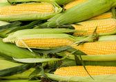 Fresh corn on cob — Stock Photo