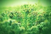 Wild meadow flowers — Stock Photo