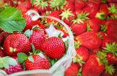 Morango fresco orgânico — Foto Stock
