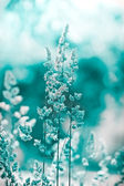 Frost in a meadow - frozen grass — Stock Photo