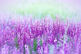 Purple flower in a meadow — Stock Photo