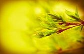 春天树叶 — 图库照片