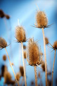 Autumn in a field of thistle - thistle field — Stock Photo