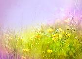 Yellow flowers in flowering — Stock Photo