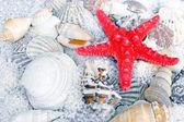 Red starfish, sea slugs and sea shells — Stock Photo