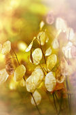 Beautiful dry plant - seeds in autumn — Stock Photo