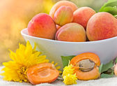 Fresh organic apricots — Stock Photo