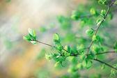 Spring leaves — 图库照片