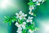 Flowering in spring - Budding bud - Flowering fruit tree — Stock Photo