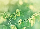 Spring leaves — Stockfoto