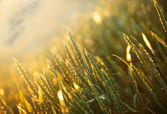 Rays of the setting sun in wheat field — Stock Photo