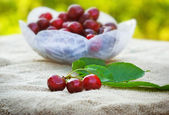 Fresh organic cherries — Stock Photo