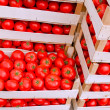 Organic tomatoes in crates ready for transport — Stock Photo