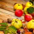 Stock Photo: Autumn fruit - Autumn harvest
