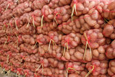 Stockpile of potatoes — Stock Photo
