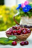Fresh organic cherries — Stock Photo