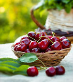 Fresh organic cherries — 图库照片