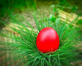Red Easter egg — Stock Photo