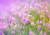 Beautiful purple flower in meadow — Stock Photo