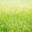 Spring grass covered with morning dew — Stockfoto