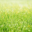Spring grass covered with morning dew — Stok fotoğraf #42040185
