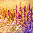Stock Photo: Beautiful purple flower in meadow