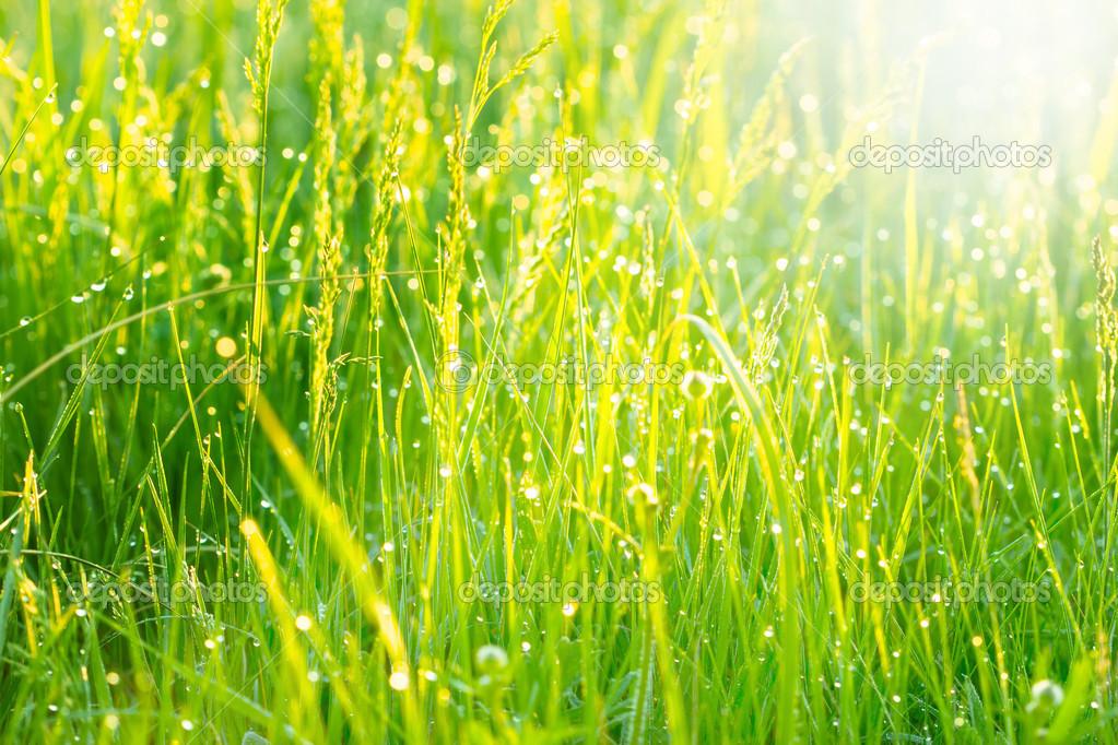 Картинки трав весной