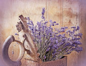 Rustic iron (old iron) and dry lavender — Stock Photo