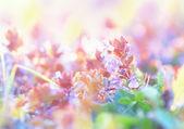 Schöne lila wiesenblumen im frühjahr — Stockfoto