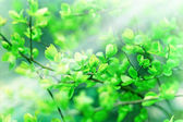Soft focus on spring leaves — Stockfoto