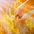 Rays of the setting sun on hands of farmer - wheat in hands — Stock Photo #44661787