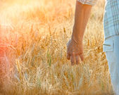 End of the day, satisfied farmer goes with hand in wheat — Stock Photo
